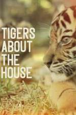 Tigers About The House: Season 1